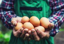 Os benefícios do consumo de ovos
