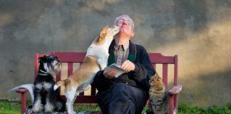 5 bons motivos pra se ter um animal de estimação