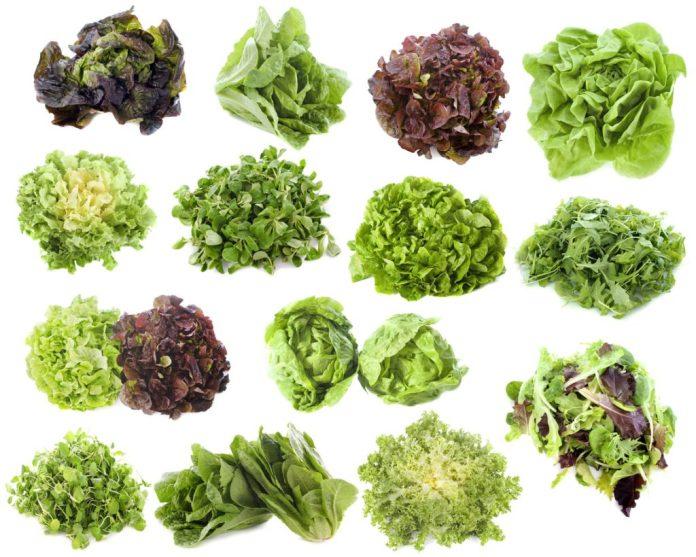 Alface – 7 tipos desta popular verdura