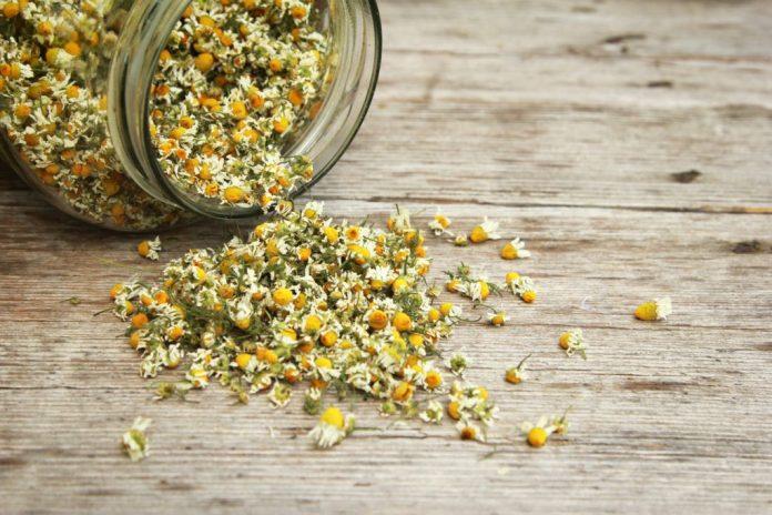 Chá de Camomila: Calmante e para problemas estomacais - 2 receitas