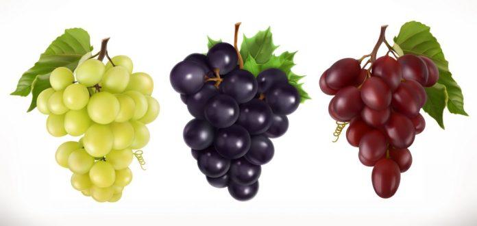 A Uva e seus benefícios para a saúde