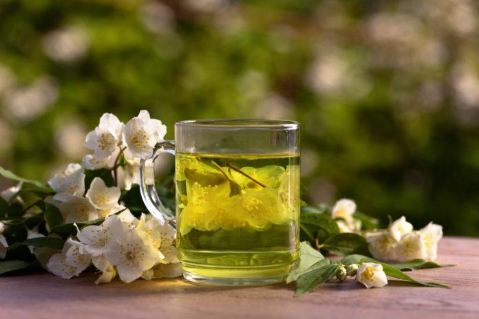 Chá de Jasmim - Antibacteriano