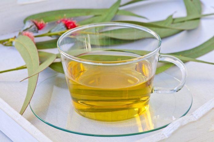Chá de Eucalipto – Famoso por seus benefícios