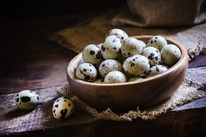 Ovo de codorna – Mais benefícios que se imagina