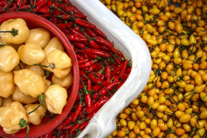 As 10 pimentas mais famosas no Brasil