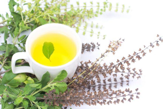 Chá de Alfavaca – Entenda porque está no programa do SUS