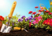 5 flores fáceis de cuidar em casa