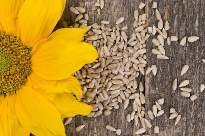 Semente de Girassol – Benefícios surpreendentes