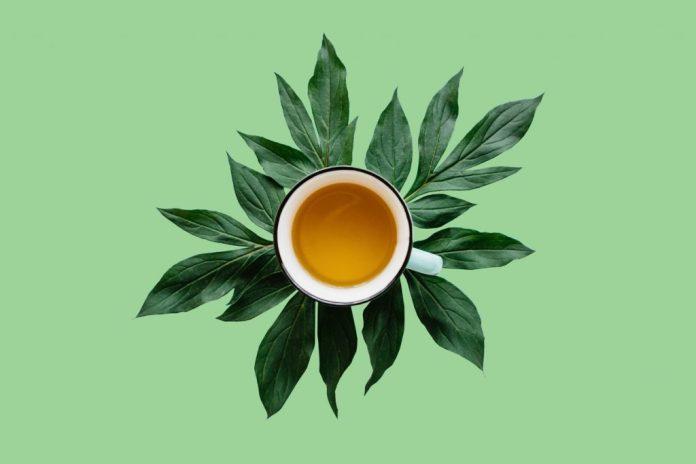 Chá de jaramataia - Indicação popular para vários usos