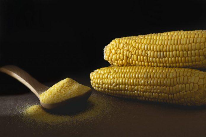 Bolo de milho cremoso com leite condensado e queijo ralado - Receita