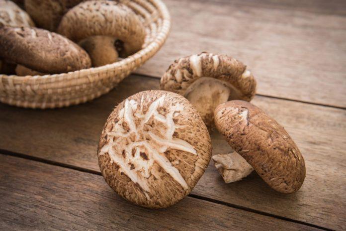 Os cogumelos mais famosos e seus benefícios