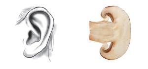 funghi-orecchio