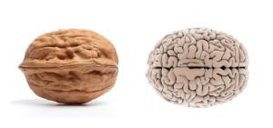 noci-cervello