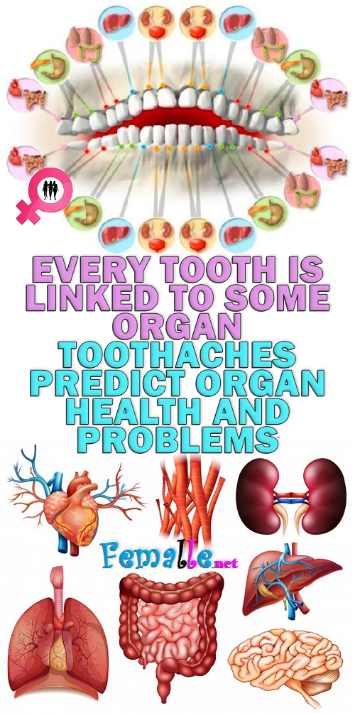 Every Tooth Is Linked To Some Organ – Toothaches Predict Organ Health And Problems