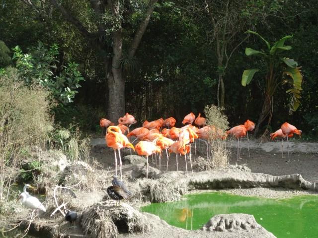 Aves y Flamencos en el Zoo de Miami