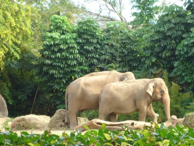 Elefantes del Zoo de Miami