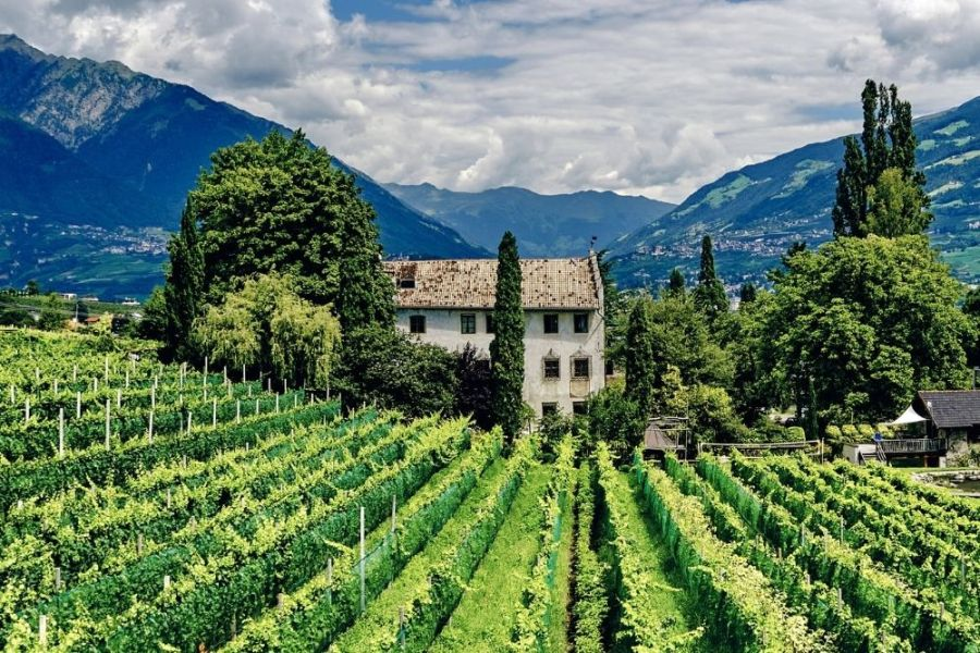 what to know about wine tours