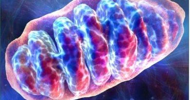 mitocondrial enzima