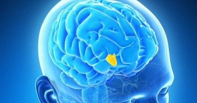 hipotalamo cerebro