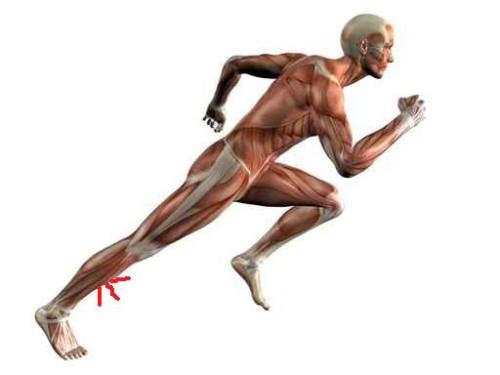 distrofia muscular tibial