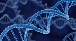Hipogonadismo hipergonadotrópico masculino - deficiencia intelectual - anomalías esqueléticas