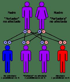 Enfermedad de Niemann-Pick tipo C