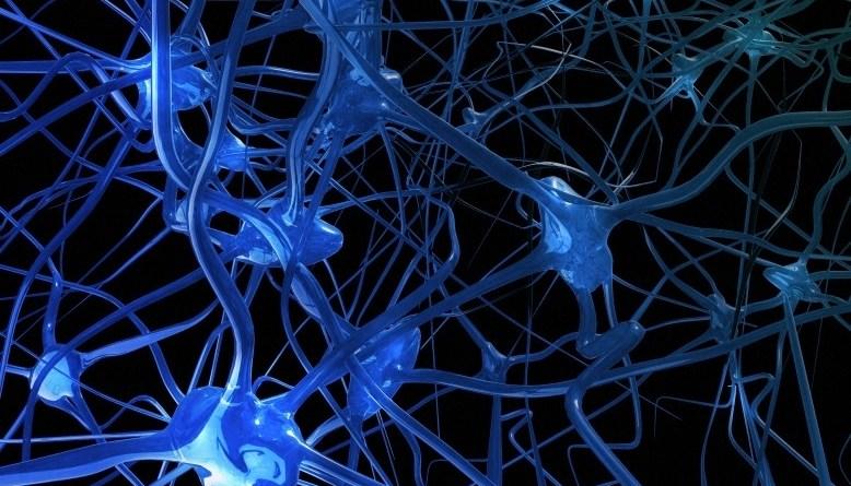 Síndrome de aniridia-ataxia cerebelosa-discapacidad intelectual
