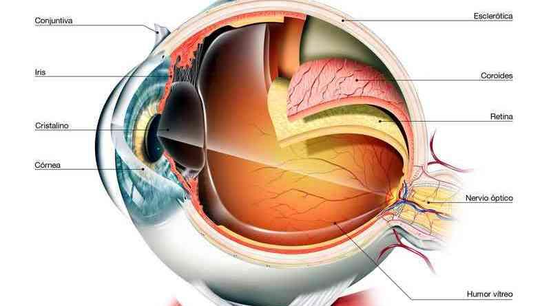 Científicos españoles corrigen una ceguera hereditaria con edición genética