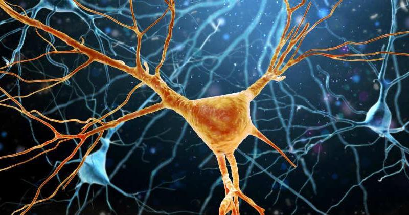 Atlas de expresión génica de ELA podría proporcionar nuevas perspectivas de enfermedad