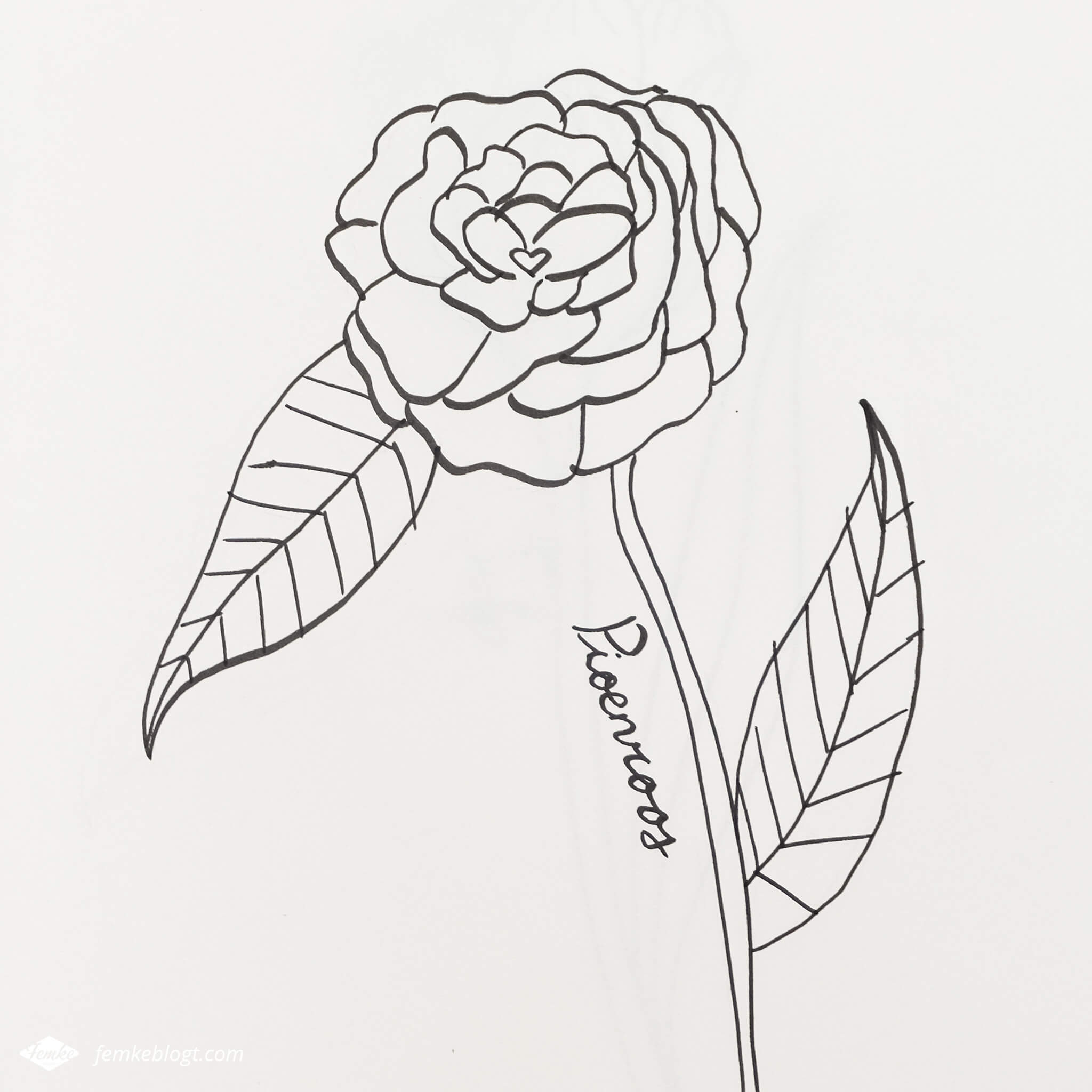 31 Dagen bloemen #4 | Pioenroos tekenen
