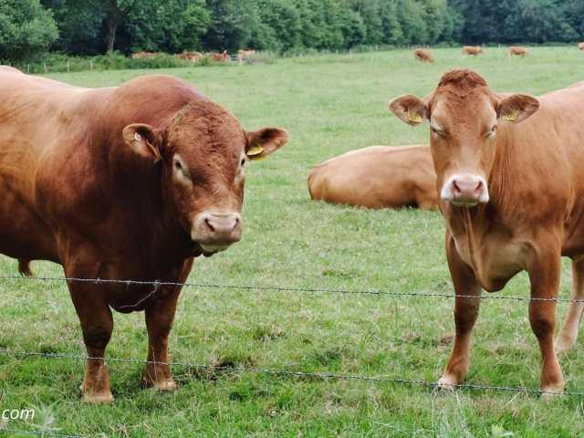 Maandoverzicht juni | Wandeling Marskramerpad, Bad Bentheim - Oldenzaal
