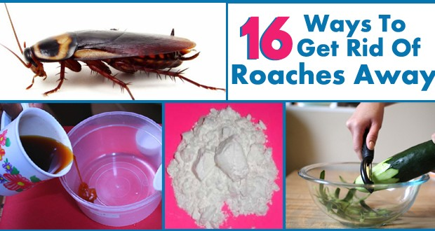 Tired of Roaches in Your House? Here are 6 Easy Solutions