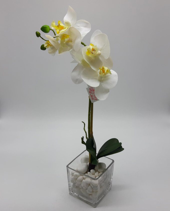 Phalaenopsis orchid on vase