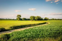 Sunset at a lonely path in a typical Dutch farm landscape in the summer month of June. This landscape is near the small city of Delden in a region called Twente, located in the province of Overijssel