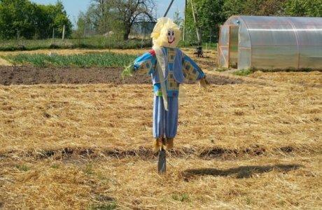 Дела огородные