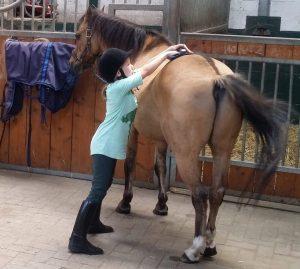 Pferd putzen