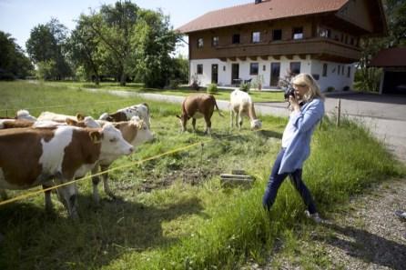 Fotokurs Grassau - Hallo Kühe - bitte lächeln !