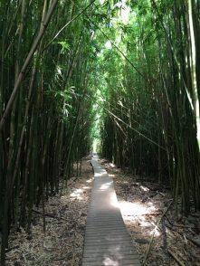 Maui Hawaii - schön angelegte Wege im Bambuswald