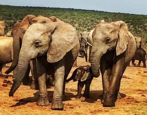 Amazing elephant - so lovely