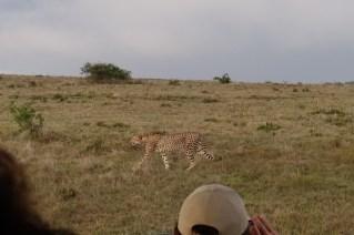 Afrika Addo Elephant Park - Gepard