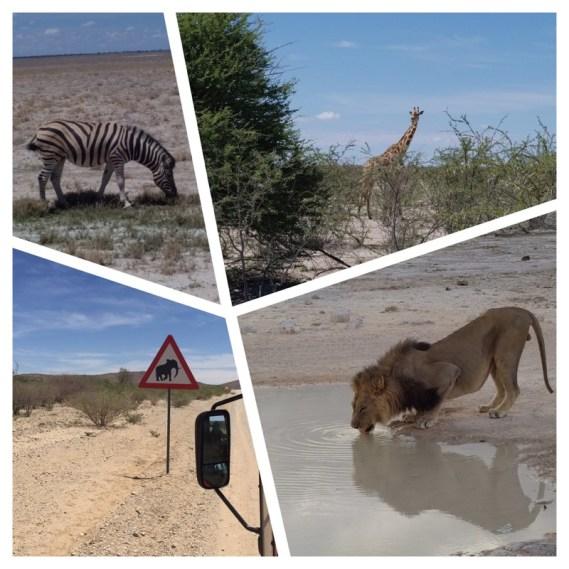 Afrika-Namibia-148