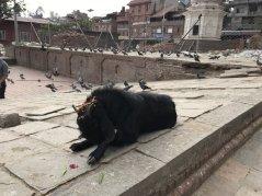 Nepal_Kathmandu_2017-L-54