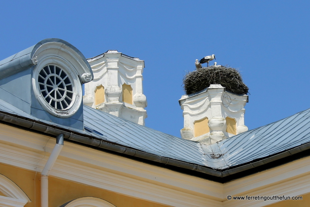Rundale Palace storks