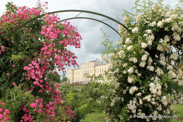Rundale Palace rose garden