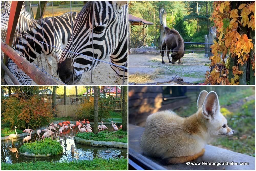 Riga Zoo animals