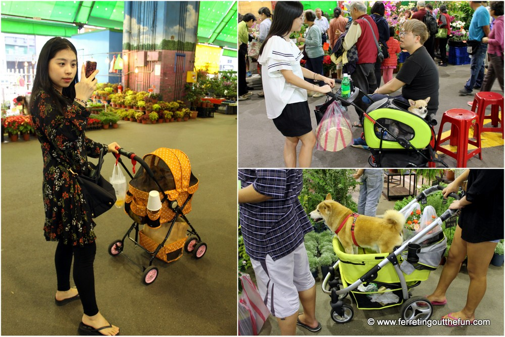 dogs of taiwan