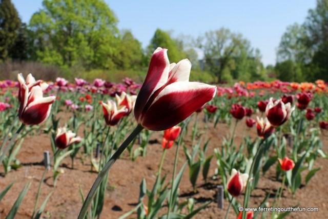 latvia botanical garden salaspils