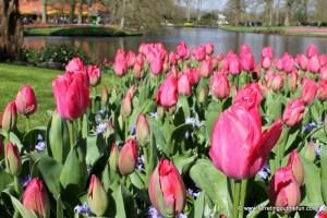 Keukenhof Gardens: A Floral Fantasy Come to Life