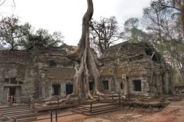 """Sie gehört zu den spannensten Tempelanlagen in Angkor Wat: Ta Prohm. Die von Wurzeln umschlungenen Gebäude bildeten die Kulisse für """"Tomb Raider"""""""
