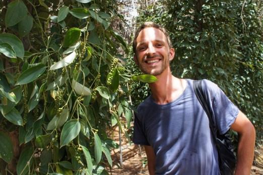 """Die Region um Kampot im südlichen Kambodscha ist sehr bekannt für ihren Pfeffer (""""Kampotpeper""""). Hier, in dieser Plantage von """"La Plantation"""" wächst glücklicher Biopfeffer"""